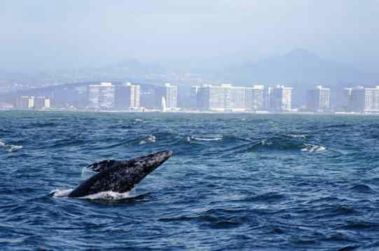 Sail San Diego Tour