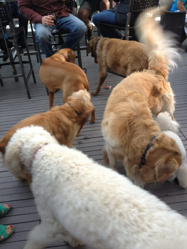 level 9 rooftop bar san diego for dogs