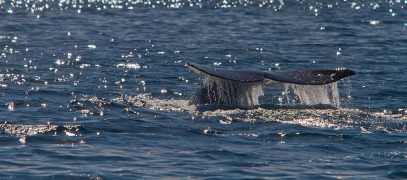 whale-hero2
