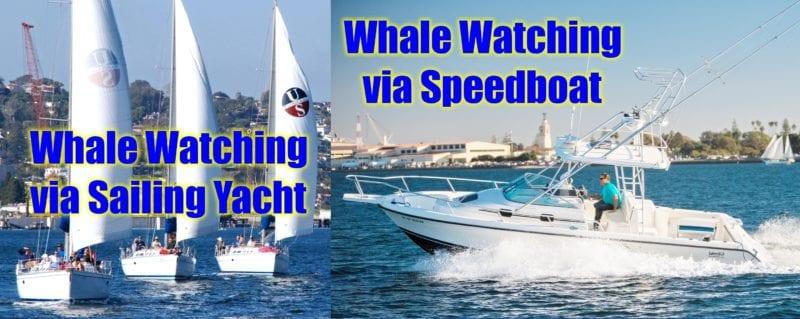 whale watching sailing speedboat san diego 2018